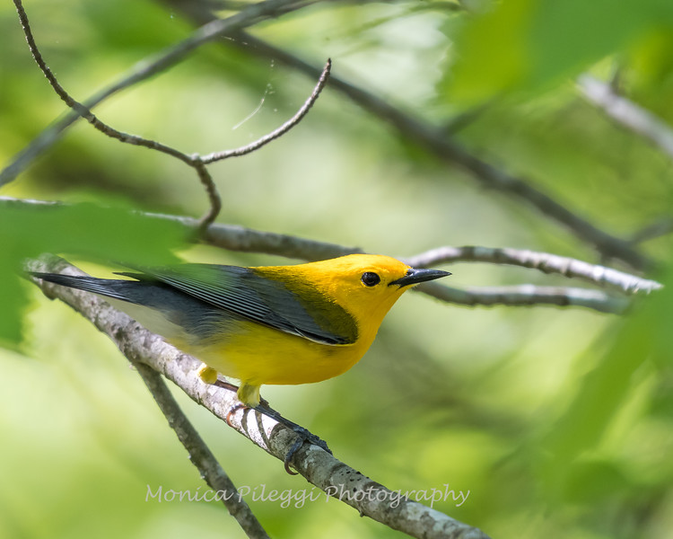 Prothonotary VA 2 May 2018-2429