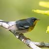 Virginia Birds May 2018-2298