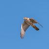 Virginia Birds May 2018-1945