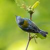 Virginia Birds May 2018-2368