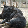 "Prince and Dayley have a cuddle at the Animals Asia Bear Rescue Centre in Chengdu, China.<br /> <br /> All proceeds go to Animals Asia, who rescued this gorgeous moon bear.<br />  <a href=""http://www.animalsasia.org/"">http://www.animalsasia.org/</a>"