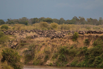 The Great Migration: the biggest mammal migration on Earth.