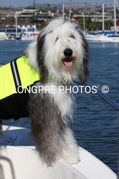'HAIRY BEAR' yachting in Newport Harbor.