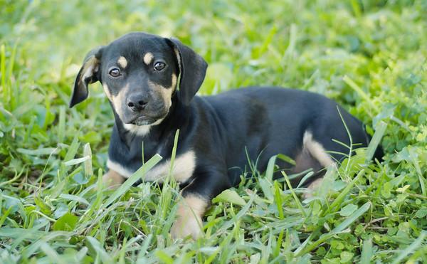 Adoptable Dogs 2014