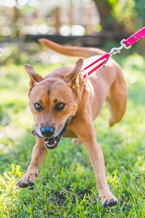 Adoptable Dogs 2016