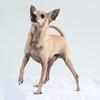 Animal Aid-4553