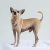 Animal Aid-4562