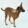Animal Aid-4515