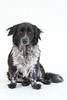 Animal Aid-4526