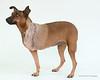 Animal Aid-4509