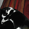 "NATIONAL CAT DAY<br /> <a href=""http://www.nationaldaycalendar.com/2016/10/28/october-29-2016-national-cat-day-national-hermit-day-national-oatmeal-day/"">http://www.nationaldaycalendar.com/2016/10/28/october-29-2016-national-cat-day-national-hermit-day-national-oatmeal-day/</a><br /> National Cat Day is observed each year on October 29th.  <br /> <br /> National Cat Day was founded to help the public recognize the number of cats that need to be rescued.  The day also encourages cat lovers to celebrate the cats in their lives for the unconditional love and companionship that they bestow upon them.<br /> <br /> HOW TO OBSERVE<br /> <br /> Pay particular attention to your cat today.  Adopt a new cat. Use #NationalCatDay to post on social media.<br /> <br /> HISTORY<br /> <br /> This day is sponsored by the Animal Miracle Foundation and was created by Pet Lifestyle Expert and Animal Welfare Advocate, Colleen Paige, in 2005.   Since its inception, it has helped save the lives of more than one million cats.<br /> <br /> <br /> <br /> Oray & Olga's cat (December 11th 2012)"