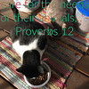 "<a href=""https://www.openbible.info/topics/caring_for_animals"">https://www.openbible.info/topics/caring_for_animals</a><br /> <br /> Proverbs 12New International Version (NIV)<br /> <a href=""https://www.biblegateway.com/passage/?search=Proverbs"">https://www.biblegateway.com/passage/?search=Proverbs</a>+12<br /> 12 Whoever loves discipline loves knowledge,<br />     but whoever hates correction is stupid.<br /> <br /> 2 <br /> Good people obtain favor from the Lord,<br />     but he condemns those who devise wicked schemes.<br /> <br /> 3 <br /> No one can be established through wickedness,<br />     but the righteous cannot be uprooted.<br /> <br /> 4 <br /> A wife of noble character is her husband's crown,<br />     but a disgraceful wife is like decay in his bones.<br /> <br /> 5 <br /> The plans of the righteous are just,<br />     but the advice of the wicked is deceitful.<br /> <br /> 6 <br /> The words of the wicked lie in wait for blood,<br />     but the speech of the upright rescues them.<br /> <br /> 7 <br /> The wicked are overthrown and are no more,<br />     but the house of the righteous stands firm.<br /> <br /> 8 <br /> A person is praised according to their prudence,<br />     and one with a warped mind is despised.<br /> <br /> 9 <br /> Better to be a nobody and yet have a servant<br />     than pretend to be somebody and have no food.<br /> <br /> 10 <br /> The righteous care for the needs of their animals,<br />     but the kindest acts of the wicked are cruel.<br /> <br /> 11 <br /> Those who work their land will have abundant food,<br />     but those who chase fantasies have no sense.<br /> <br /> 12 <br /> The wicked desire the stronghold of evildoers,<br />     but the root of the righteous endures.<br /> <br /> 13 <br /> Evildoers are trapped by their sinful talk,<br />     and so the innocent escape trouble.<br /> <br /> 14 <br /> From the fruit of their lips people are filled with good things,<br />     and the work of their hands brings them reward.<br /> <br /> 15 <br /> The way of fools seems right to them,<br />     but the wise listen to advice.<br /> <br /> 16 <br /> Fools show their annoyance at once,<br />     but the prudent overlook an insult.<br /> <br /> 17 <br /> An honest witness tells the truth,<br />     but a false witness tells lies.<br /> <br /> 18 <br /> The words of the reckless pierce like swords,<br />     but the tongue of the wise brings healing.<br /> <br /> 19 <br /> Truthful lips endure forever,<br />     but a lying tongue lasts only a moment.<br /> <br /> 20 <br /> Deceit is in the hearts of those who plot evil,<br />     but those who promote peace have joy.<br /> <br /> 21 <br /> No harm overtakes the righteous,<br />     but the wicked have their fill of trouble.<br /> <br /> 22 <br /> The Lord detests lying lips,<br />     but he delights in people who are trustworthy.<br /> <br /> 23 <br /> The prudent keep their knowledge to themselves,<br />     but a fool's heart blurts out folly.<br /> <br /> 24 <br /> Diligent hands will rule,<br />     but laziness ends in forced labor.<br /> <br /> 25 <br /> Anxiety weighs down the heart,<br />     but a kind word cheers it up.<br /> <br /> 26 <br /> The righteous choose their friends carefully,<br />     but the way of the wicked leads them astray.<br /> <br /> 27 <br /> The lazy do not roast[a] any game,<br />     but the diligent feed on the riches of the hunt.<br /> <br /> 28 <br /> In the way of righteousness there is life;<br />     along that path is immortality.<br /> Footnotes:"