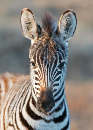Africa Animal Diversity