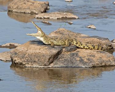 Croc Camo