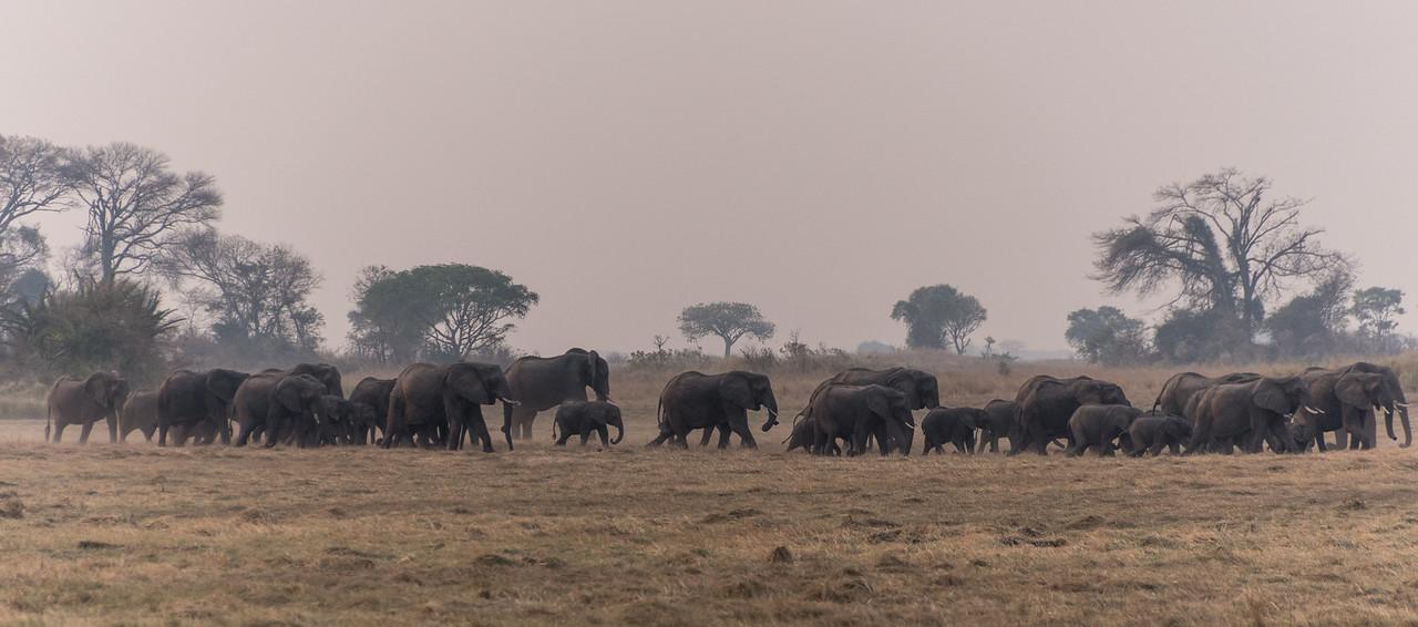 Elephant, Busanga Plains, Kafue National Park, Zambia