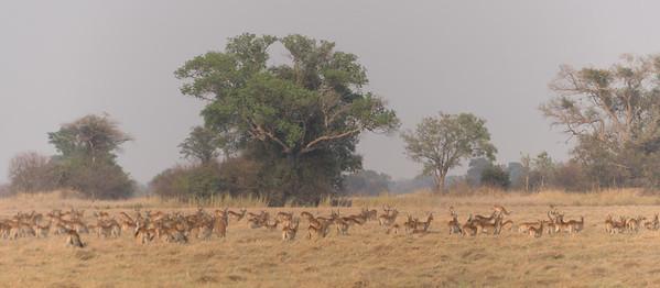 Busanga Plains, Kafue National Park, Zambia