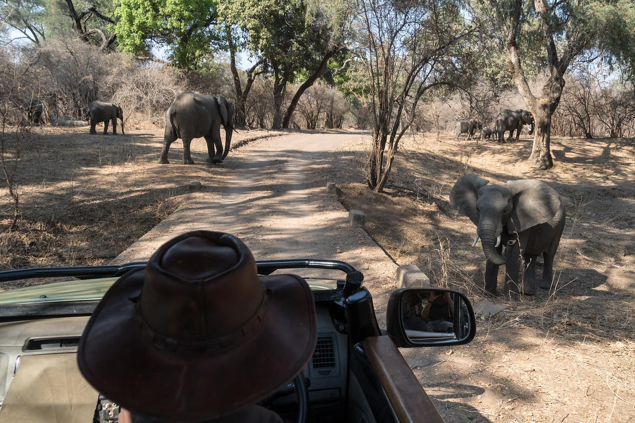 Elephant, Mana Pools National Park, Zimbabwe