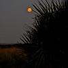 Blood moon behind bush