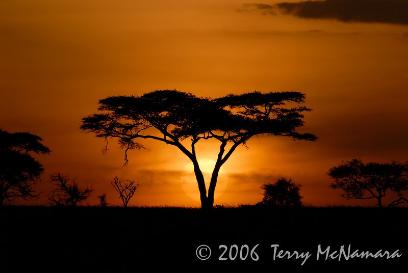 Sunrise Serengeti