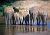 African Elephants, Loxodonta africana, Ewaso Nyiro River (aka Uaso Nyiro, Ewaso Ngiro), Samburu National Reserve, Kenya, Africa, Proboscidea Order, Elephantidae Family