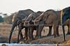 African Elephants, Loxodonta africana,  at a Water Hole,  Tsavo East National Park, Kenya, Africa, Proboscidea Order, Elephantidae Family