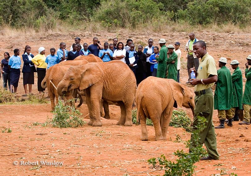 Female Students and Baby African Elephants (Loxodonta africana), Daphne Sheldrick Animal Orphanage, Nairobi, Kenya, Africa