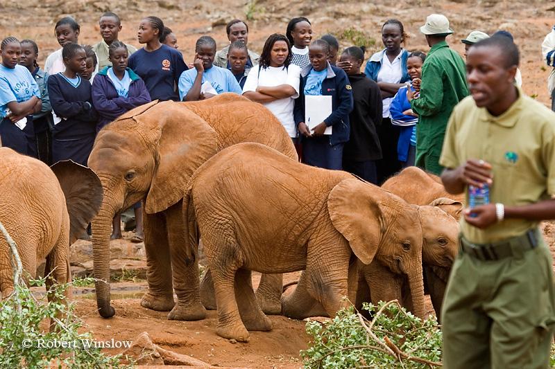 Female School Students, Baby African Elephant (Loxodonta africana), Daphne Sheldrick Animal Orphanage, Nairobi, Kenya, Africa