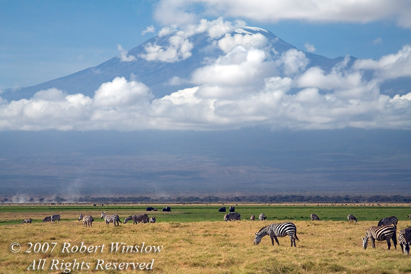 Plains Zebras, Elephants and Wildebeests grazing on the Savannah, Mount Kilimanjaro in Background, Amboseli National Park, Kenya, Africa