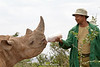 Young Black Rhinocerous (Diceros bicornis) Being Fed Milk, Daphne Sheldrick Animal Orphanage, Nairobi, Kenya, Africa