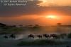 """Going Home"", Sunset, Wildebeests (Connochaetes taurinus), Amboseli National Park, Kenya, Africa"