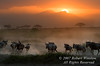 Sunset, Wildebeests (Connochaetes taurinus), Amboseli National Park, Kenya, Africa