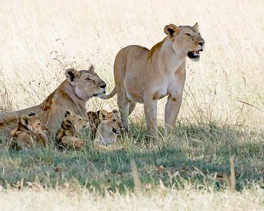 2 Moms, 4 Cubs