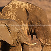 Muddy profiles, elephants  at a water hole.