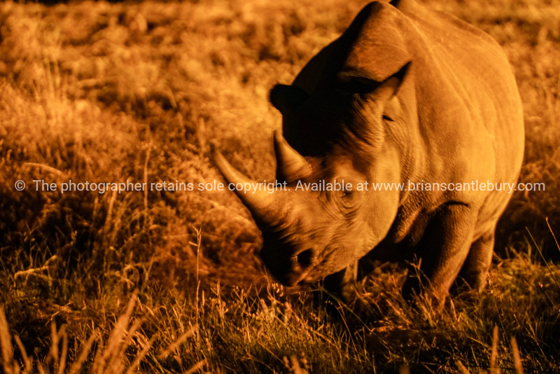 Namibia, Etosha NP, Okaukuejo-5