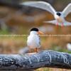Lady Elliot Island sunrise & birds-331