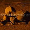 Rhino arrive at camp waterhole late at night.