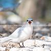 Lady Elliot Island sunrise & birds-202