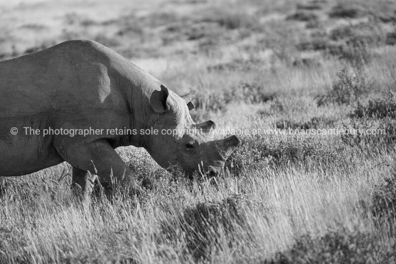 Namibia, Etosha NP, Okaukajuejo-359