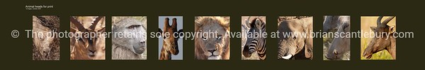 African Heads.<br /> Selection 9 wild animal African heads. Printable only by ordering direct; brian@brianscantlebury.com. Please email and advise your size.( print ratio 5;1 ie, 40 high ='s 2000wide including border) and other specifics for quote.