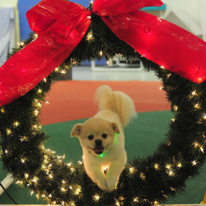 Agility Wreath 2011