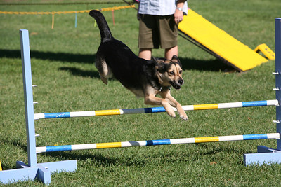 Agility action shots