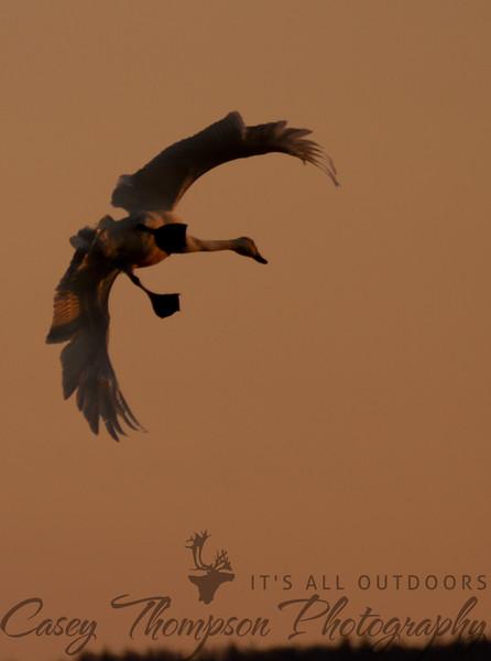 Sunrise Landing
