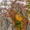 Black Bear on the Mountain ~ Fall in Alaska.