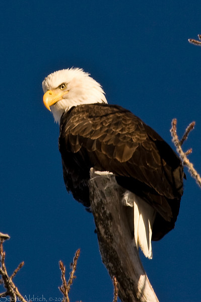 Eagle near Portage, Alaska - it was 15 below zero that day