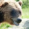 Grizzly Smirk