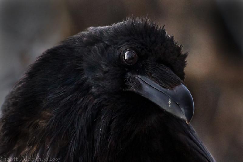 Raven, Alaska.