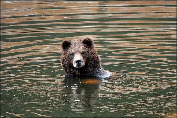 Alaska-Sitka(edit)_0206