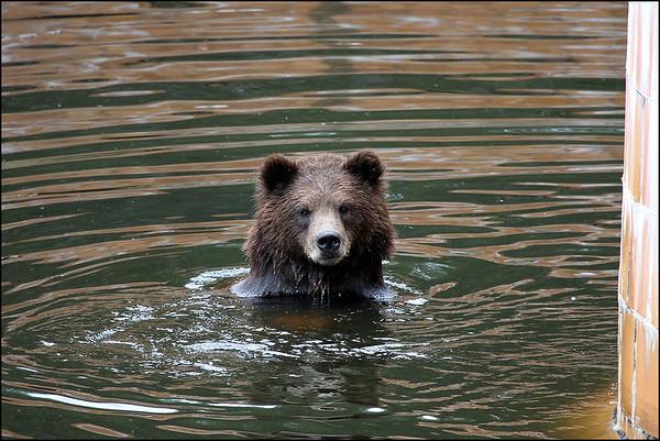 Alaska-Sitka(edit)_0205