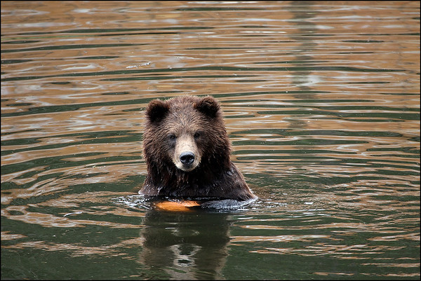 Alaska-Sitka(edit)_0207