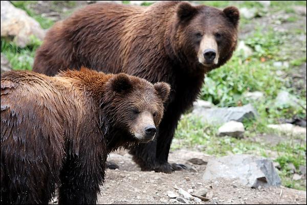 Bears - 2009